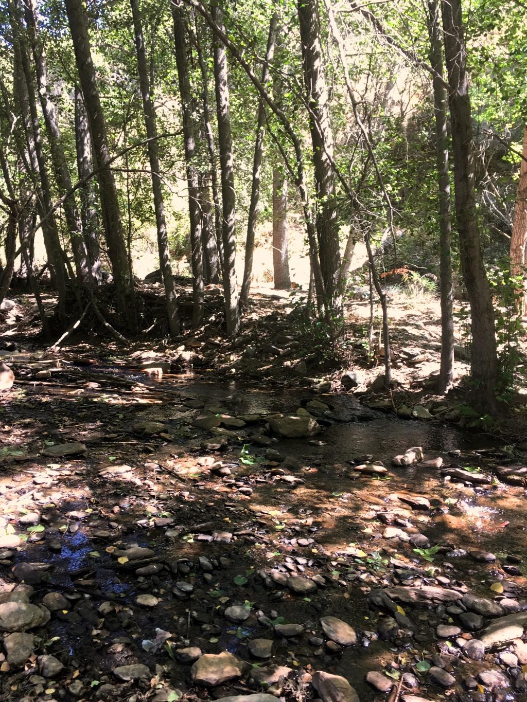 Hidden Stream in the Forest