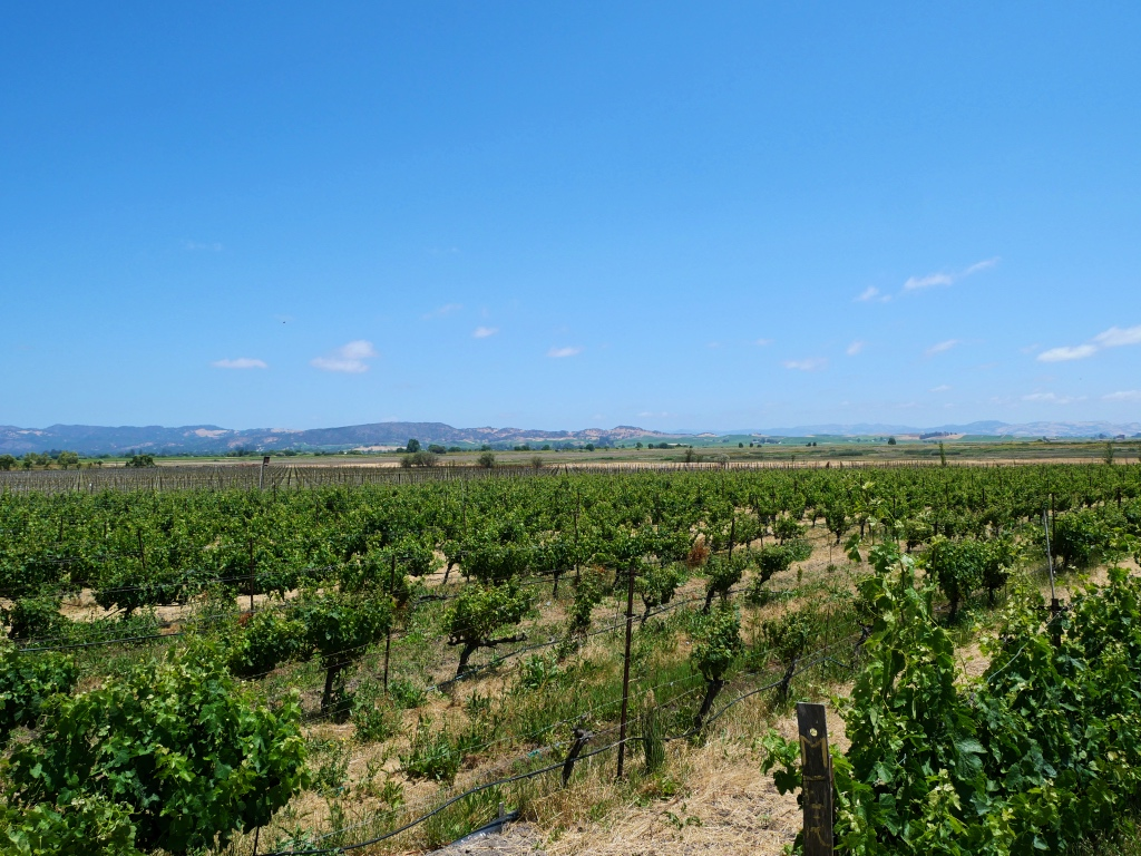 The Vines at Jacuzzi Family Vineyard